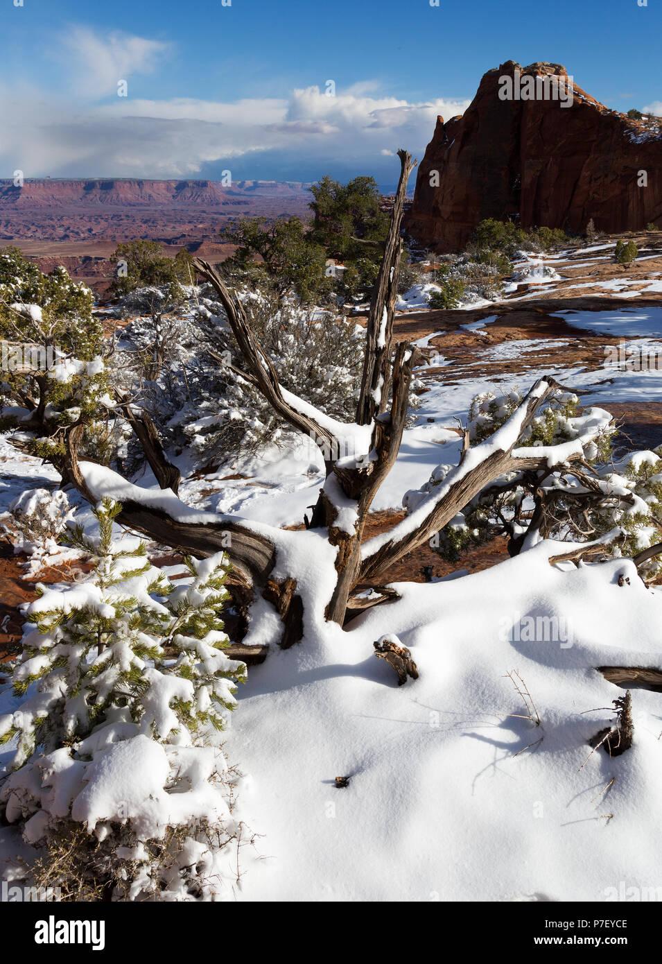 Canyonland National Park, Moab, Utah, USA - Stock Image