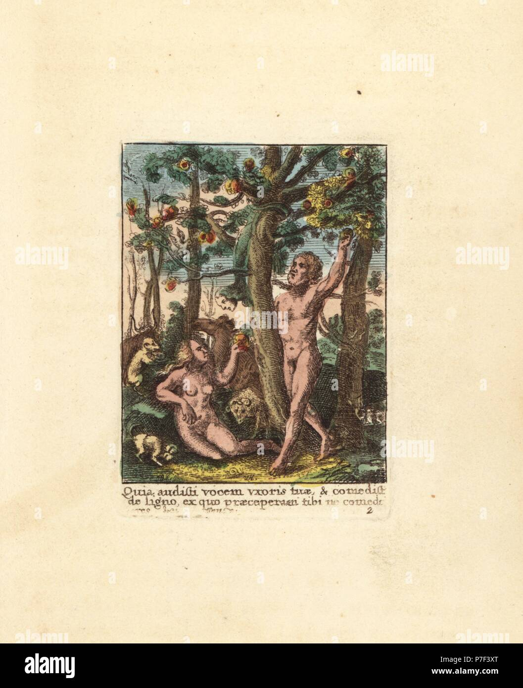 Adam plucking an apple and Eve tasting the forbidden fruit in the ...