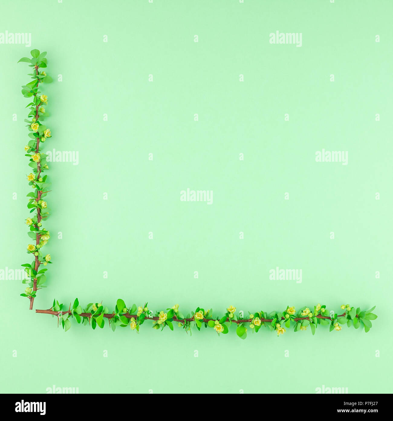 Creative flat lay concept top view of spring blossoming