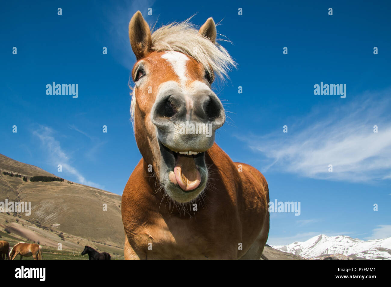 Funny Portrait Of Smiling Horse Against The Blue Sky Stock Photo Alamy