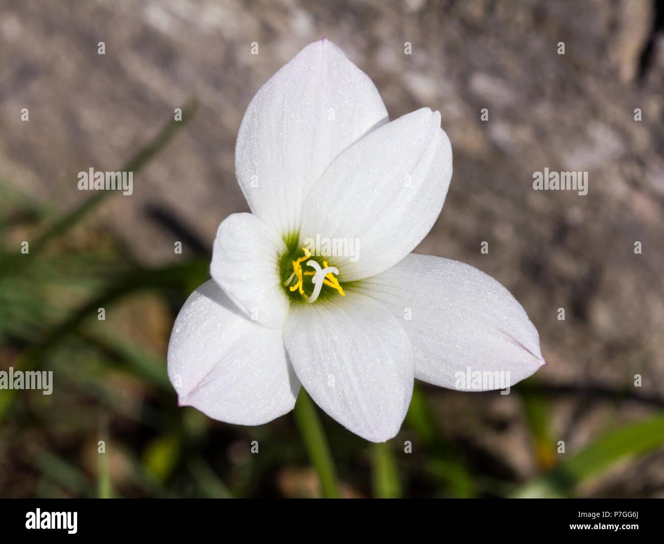 Six Petals Stock Photos Six Petals Stock Images Alamy