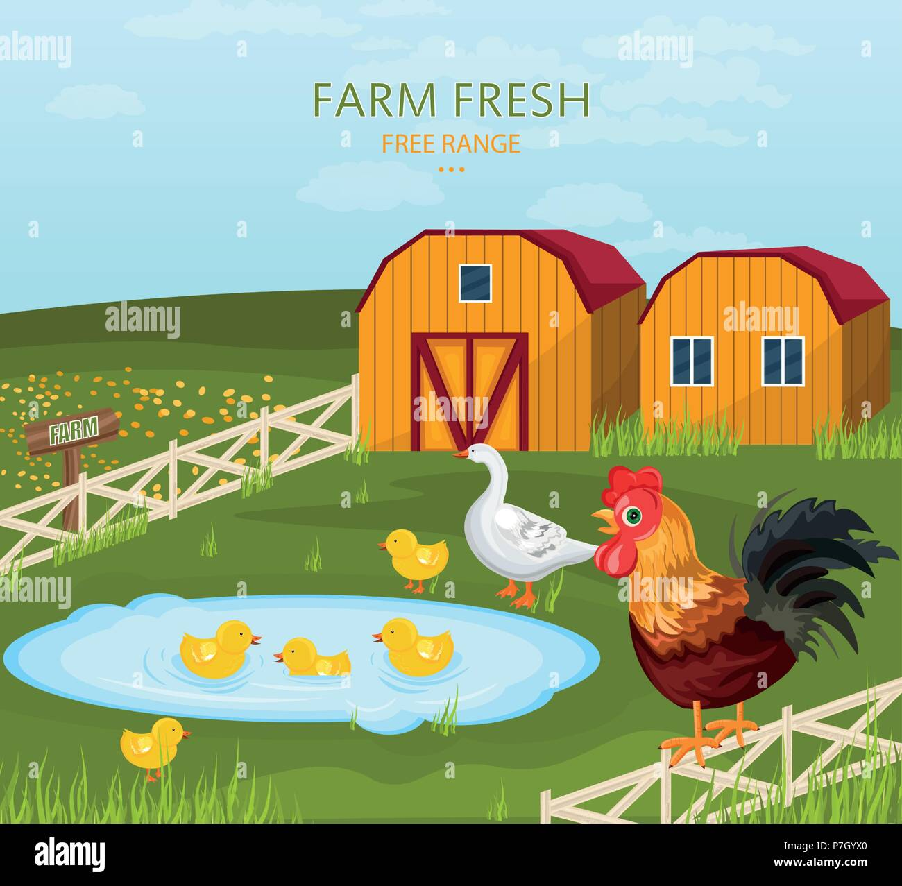 Free range chicken growing in the farm Vector illustration - Stock Vector