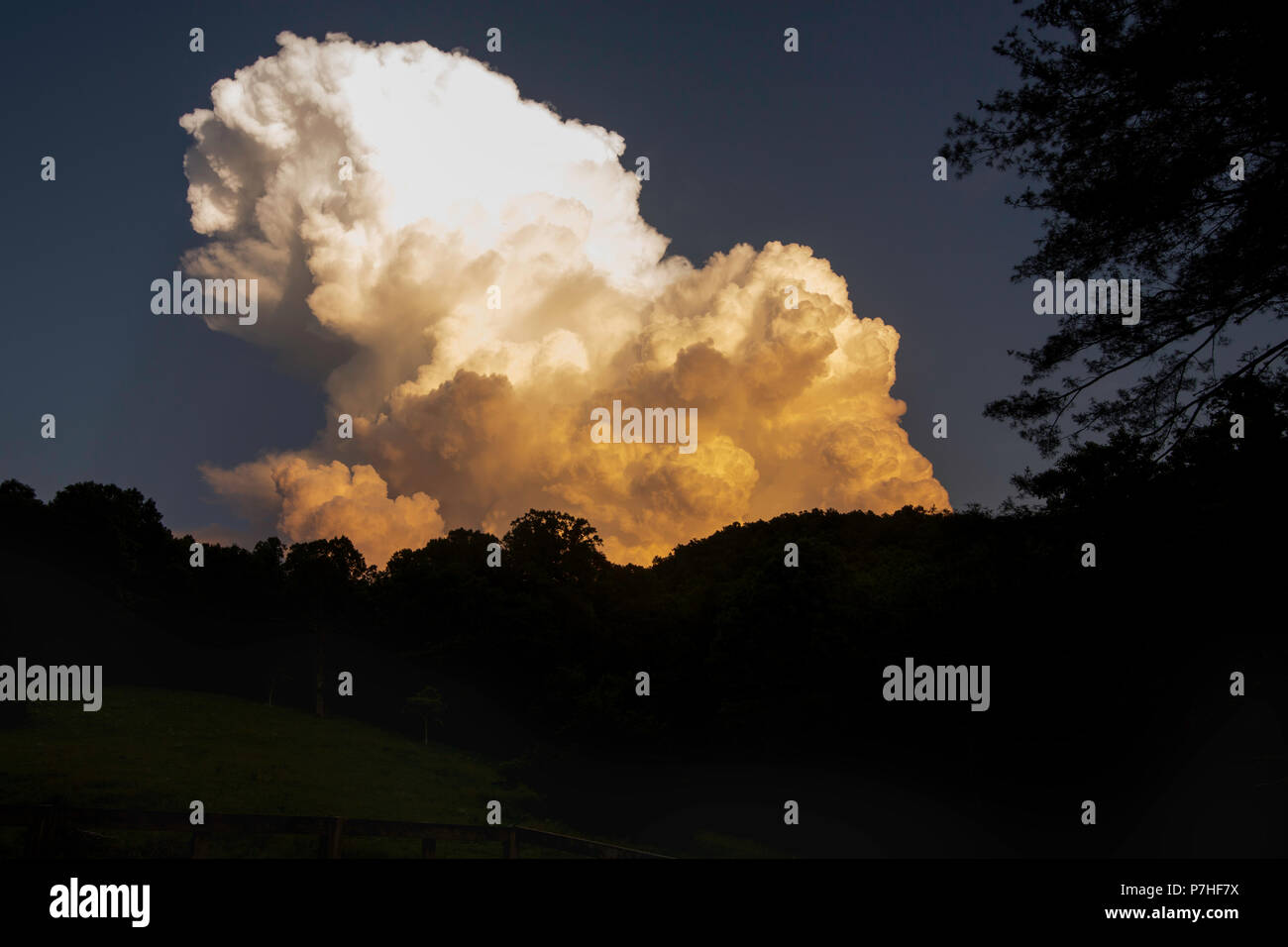 Summer Thunderhead over Trees - Stock Image