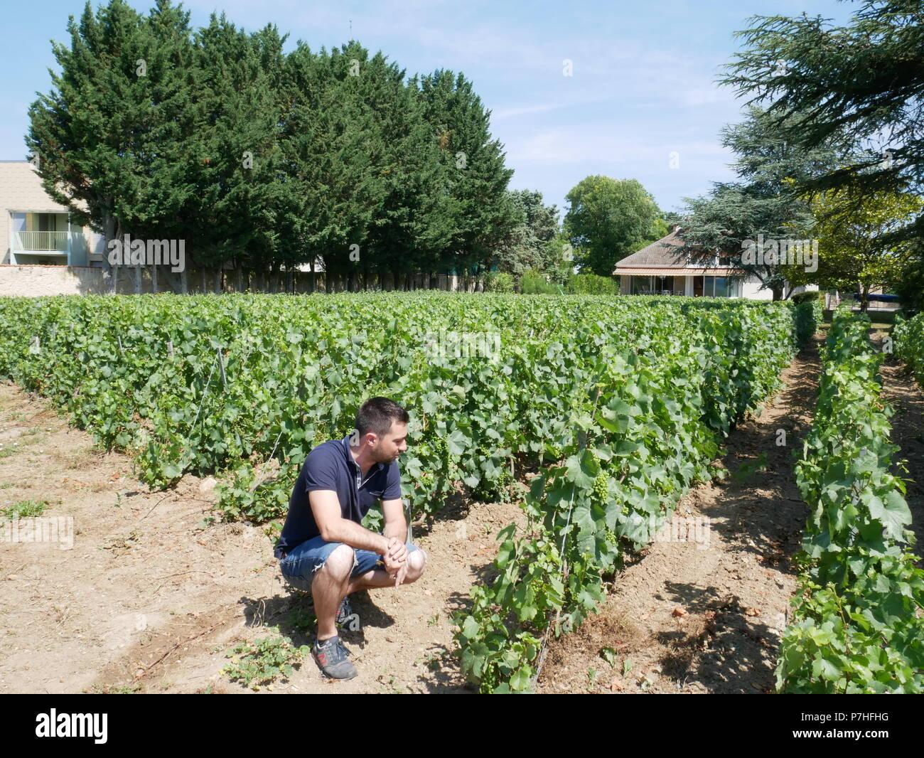 Champagne wine maker Etienne Calsac in his vineyards in Avize, France. - Stock Image