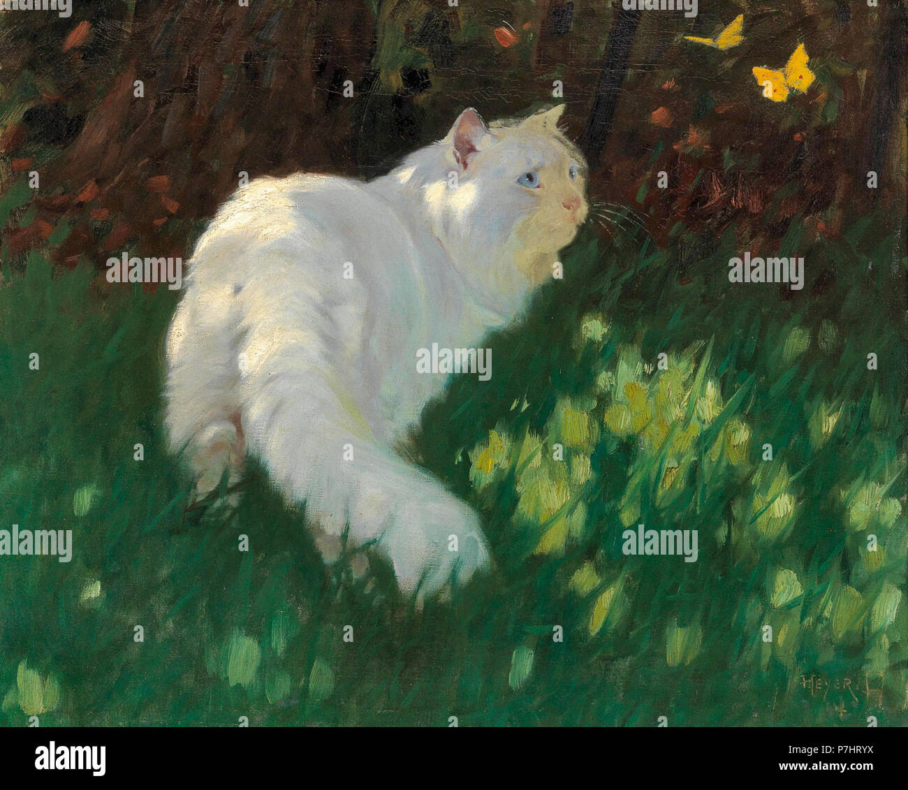Heyer  Arthur - Weisse Katze Und Schmetterlinge - Stock Image