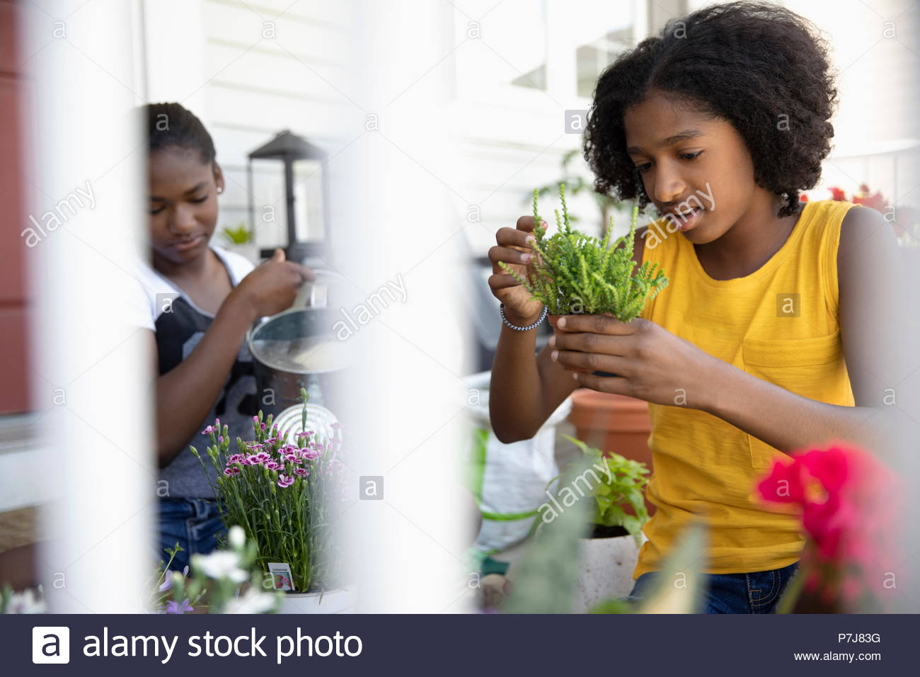 Tween sisters potting plants on front stoop - Stock Image