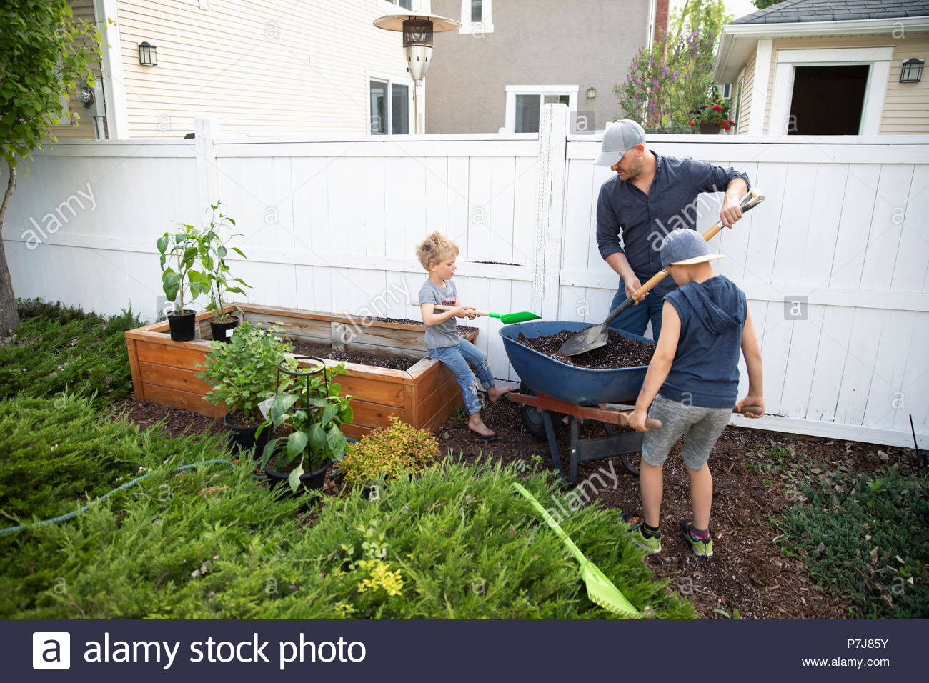 Father and sons gardening in back yard - Stock Image