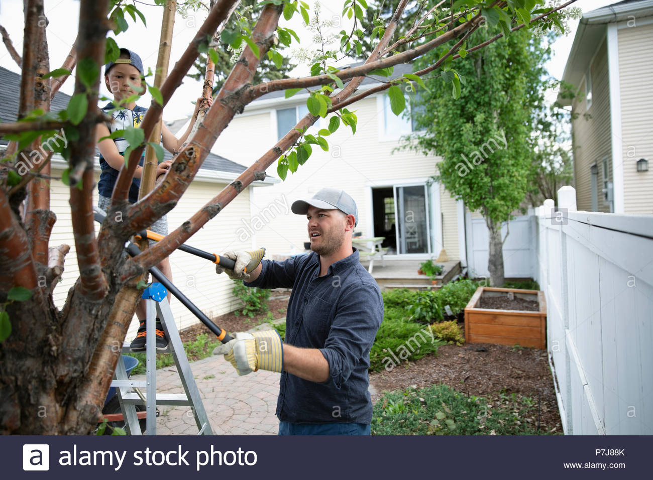 Father and son doing yard work, pruning tree in back yard - Stock Image