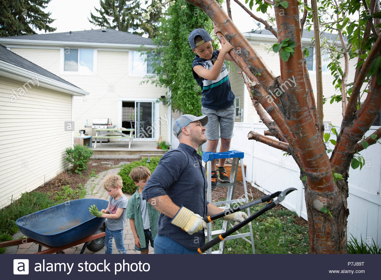 Father and sons doing yard work, pruning tree in back yard - Stock Image