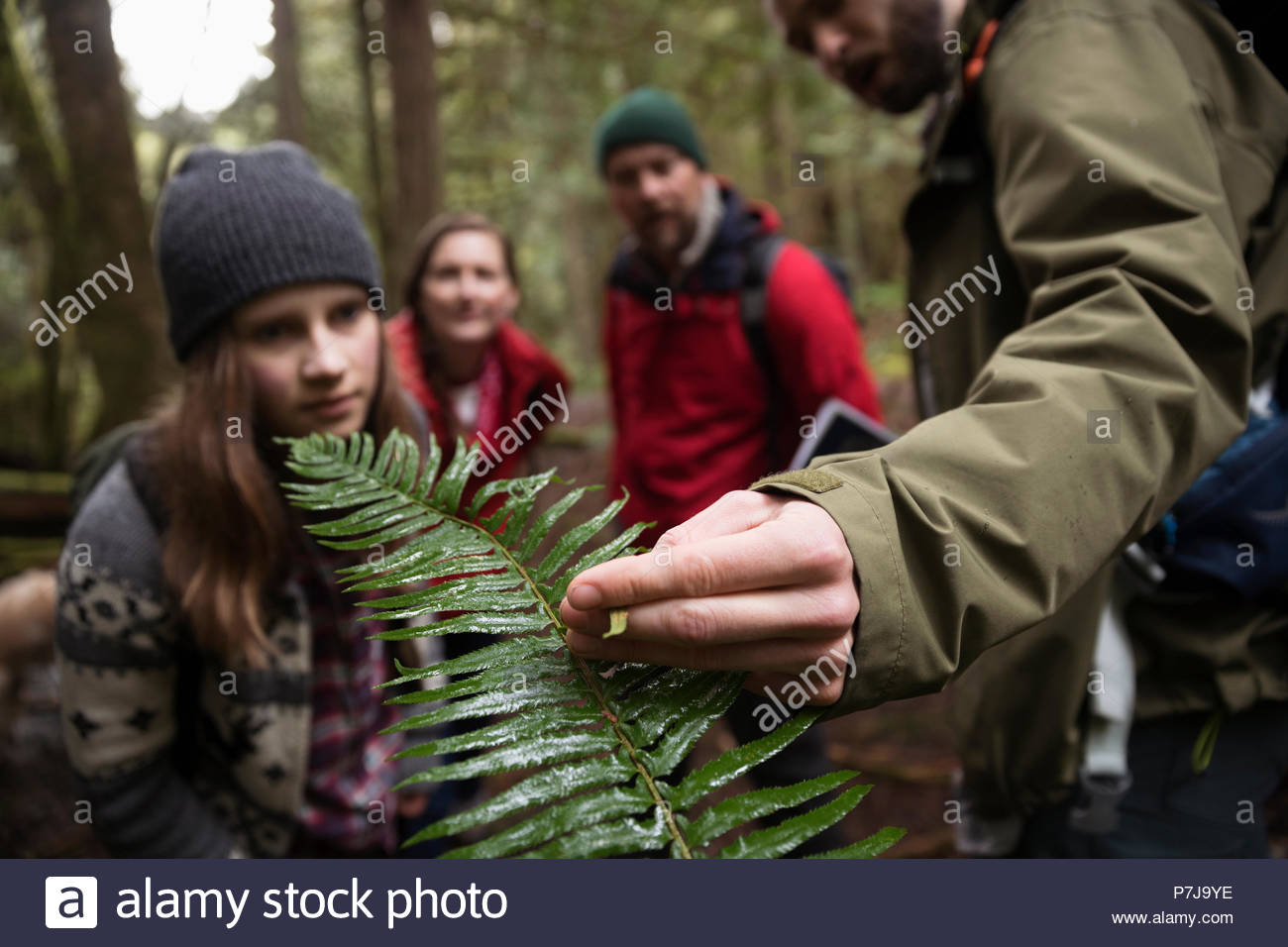 Trail guide and family hiking, exploring in woods Stock Photo