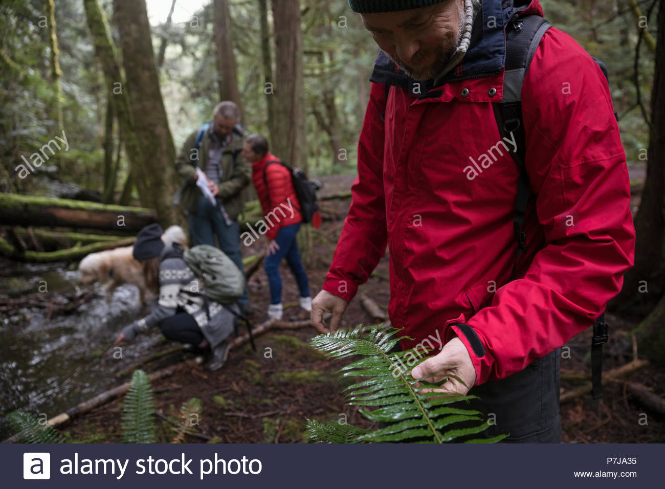 Family hiking, exploring in woods - Stock Image
