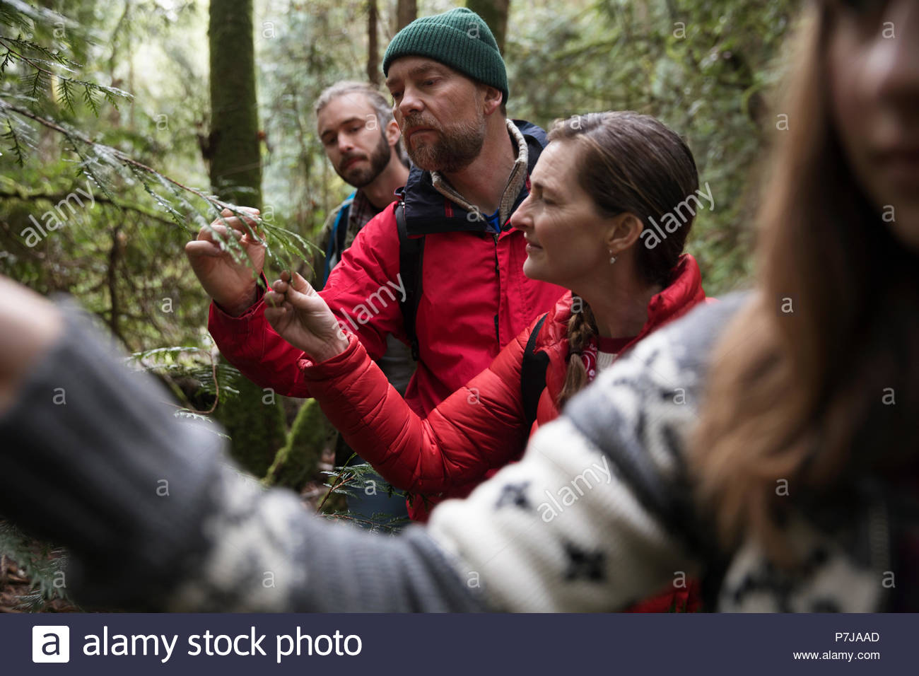 Curious couple hiking in woods - Stock Image