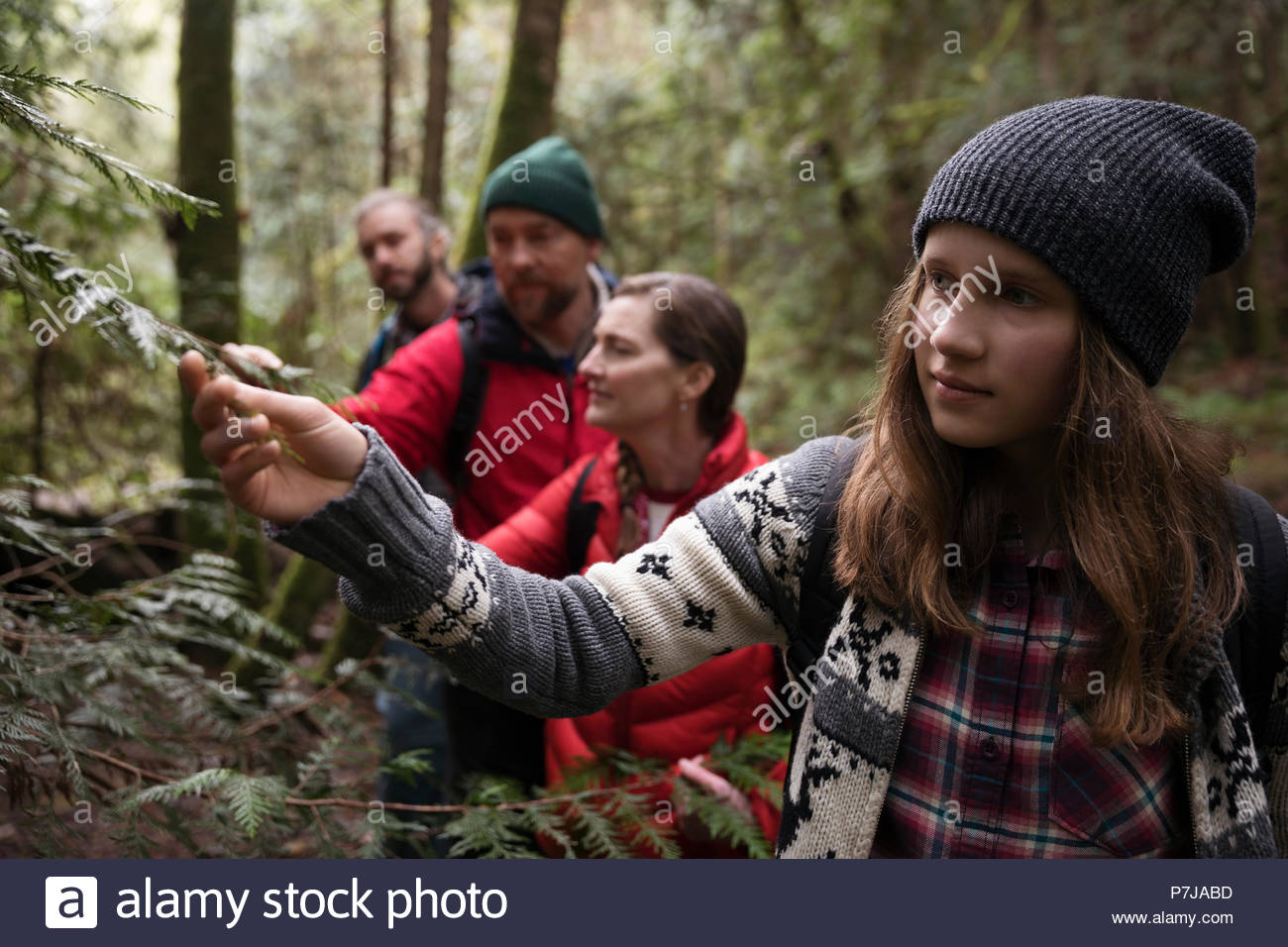 Curious teenage girl hiking in woods with family - Stock Image