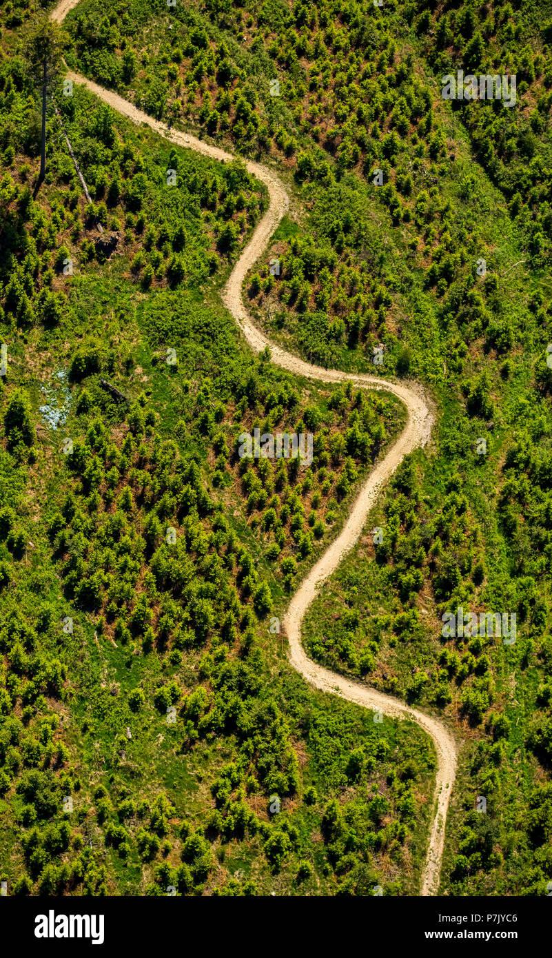 winding path, meadow, conifers, spruce, looped mountain path at the Hochheidehütte in Niedersfeld, Rothaargebirge, Winterberg, Hochsauerland, North Rhine-Westphalia, Germany - Stock Image