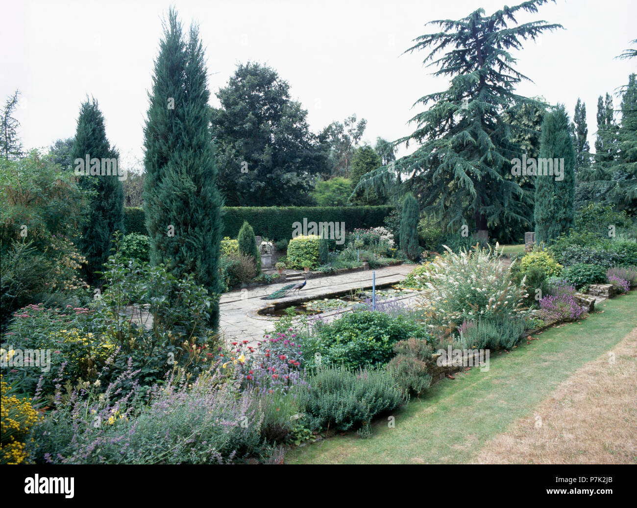 Fastigiate conifers and pond in large country garden - Stock Image