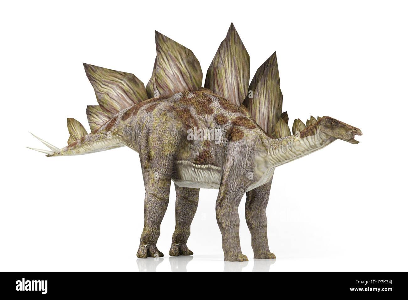 Stegosaurus isolated on white background, 3D rendering - Stock Image