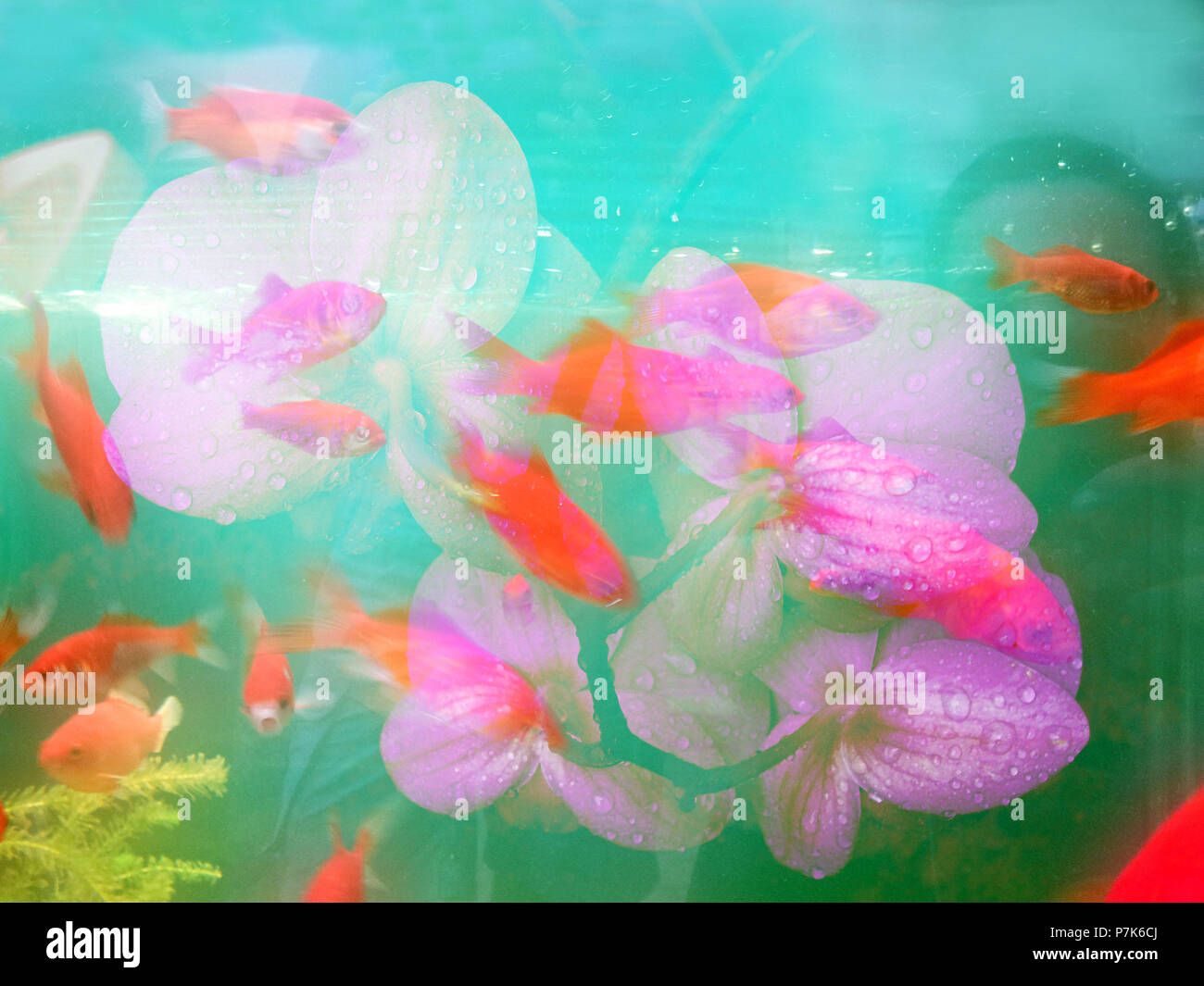 Flowers and fish, composing - Stock Image