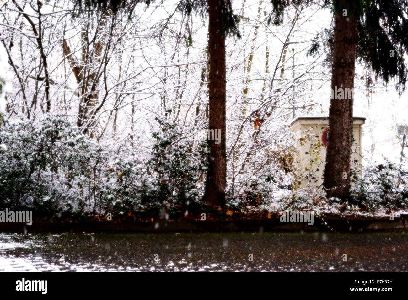A snow-covered backyard in winter with trees and plants at snowfall - Stock Image