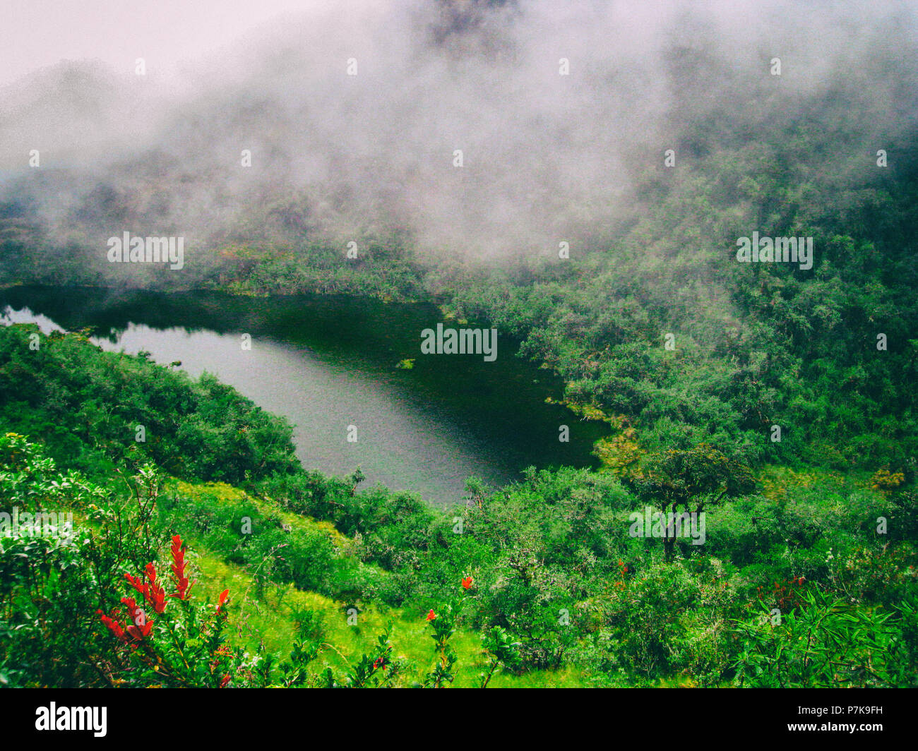 Beautiful chill wallpaper image of red flower in the jungle with a lake on the background and clouds covering the mountains. Peru. No people.
