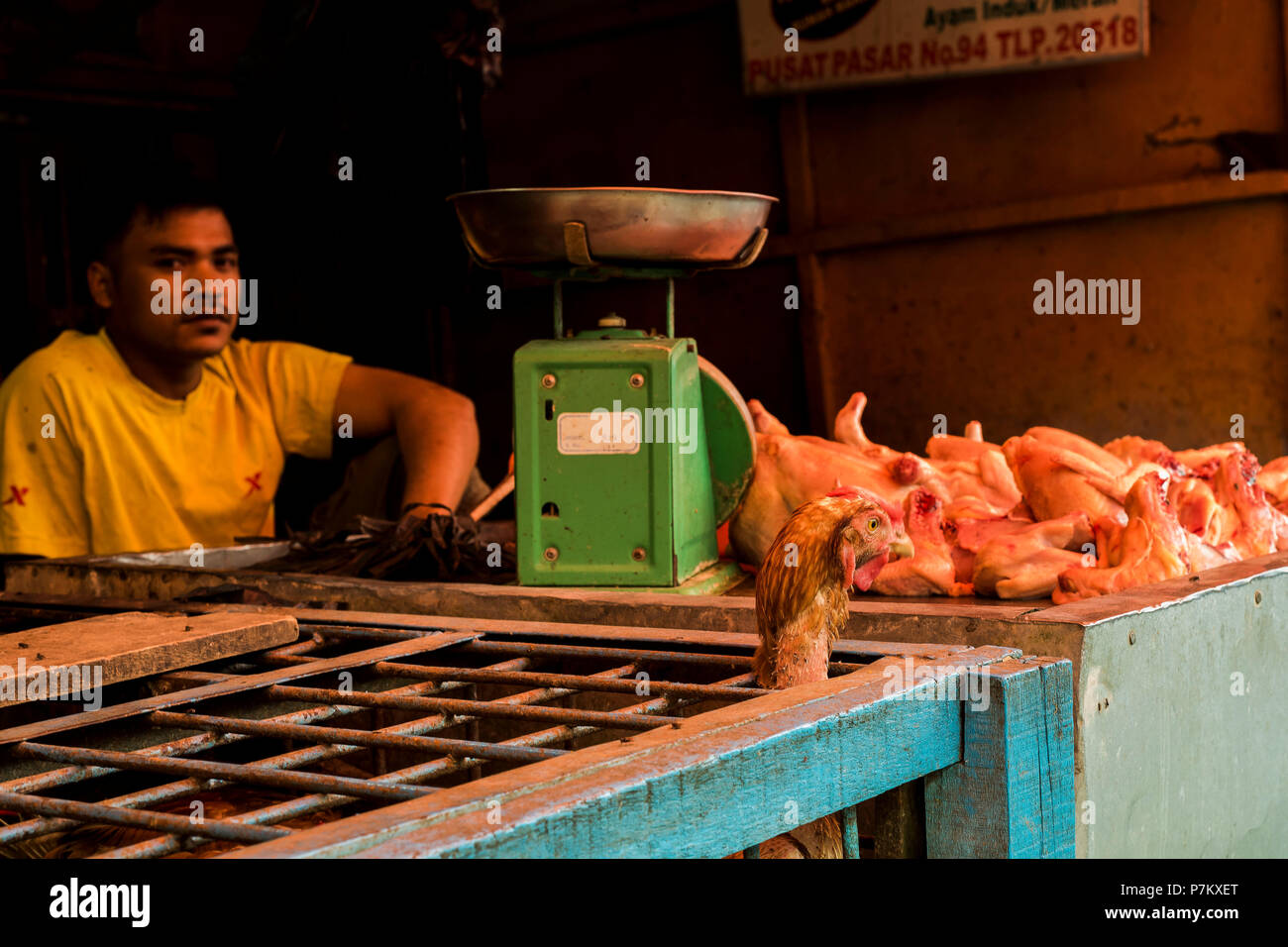 A chicken looking out of the cage to the already slaughtered chickens, in the background sits the butcher, - Stock Image