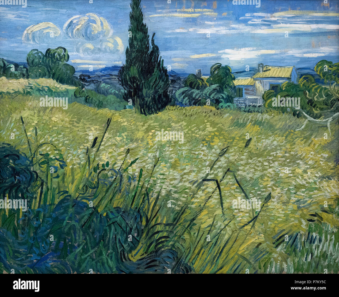 Vincent van Gogh (1853-1890), Green Corn (Green Wheat Field with Cypress), 1889. National Gallery in Prague (Národní galerie v Praze).   Oil on canvas - Stock Image