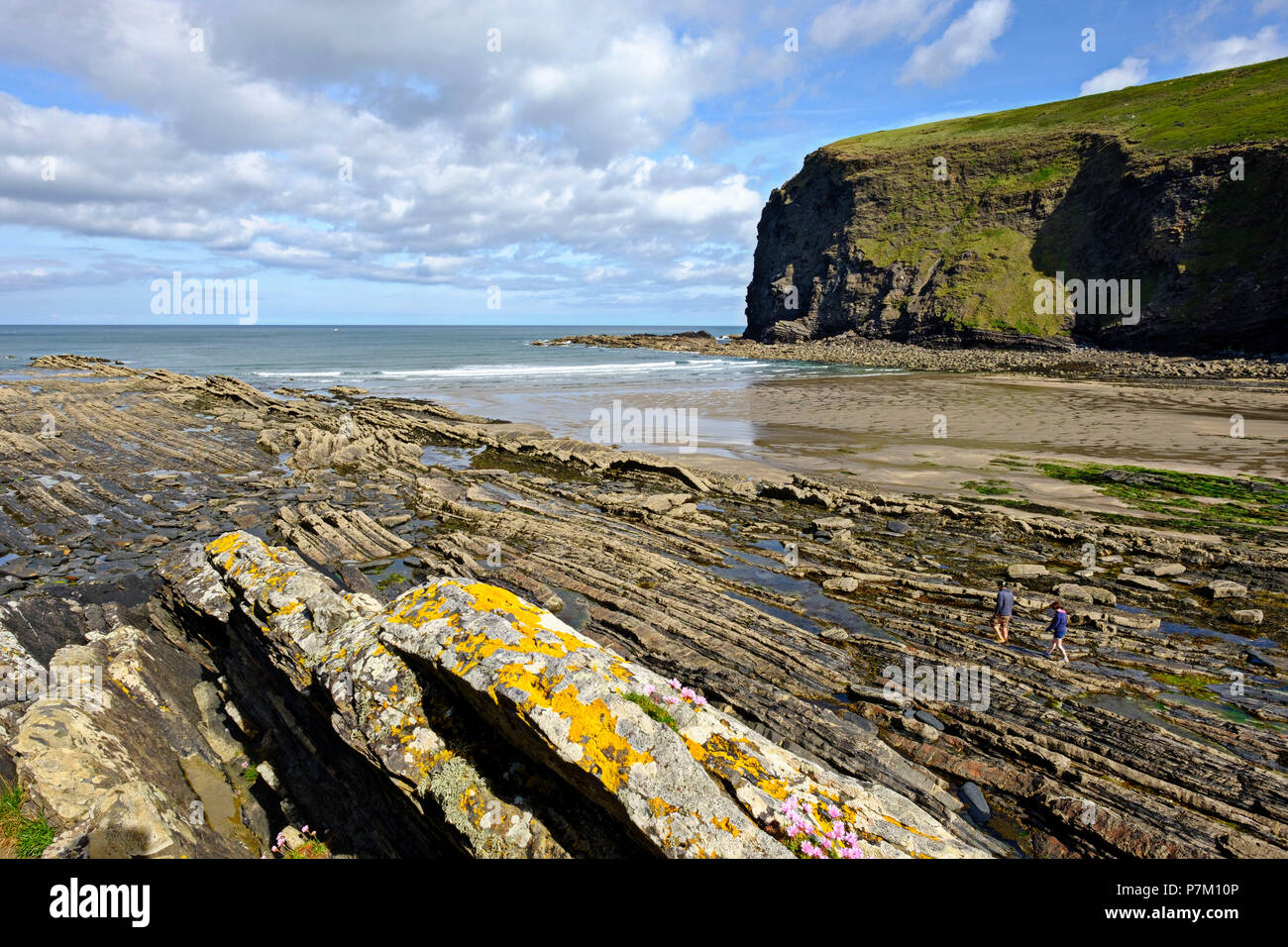 Bay of Crackington Haven, Cornwall, England, UK - Stock Image