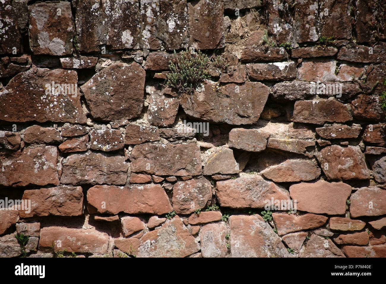 A rustic wall of staggered and broken stones with scattered succulent plants in the cracks. - Stock Image