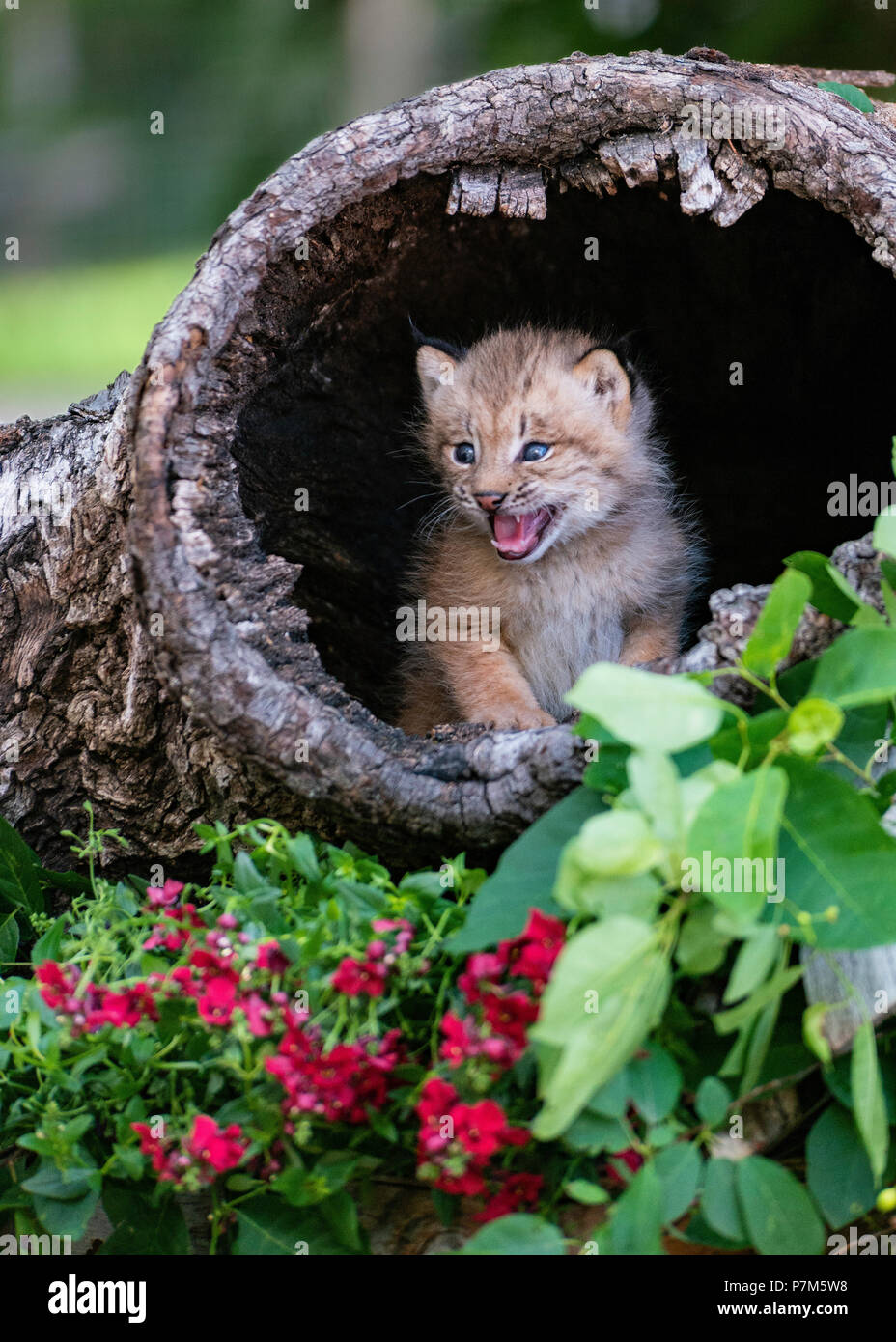 Don't Mess With Me! - Stock Image