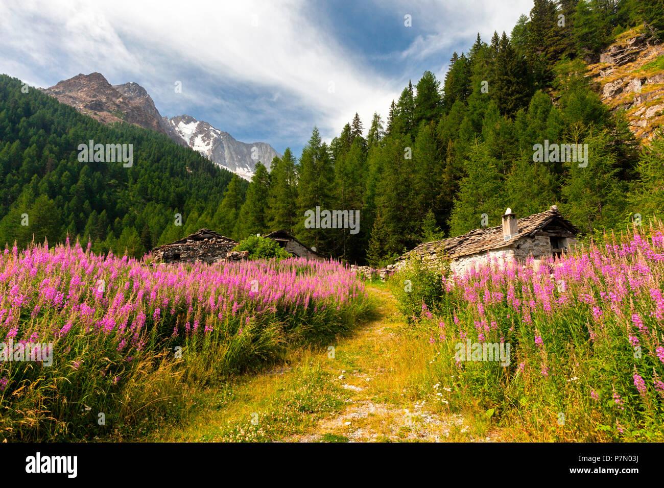 Hiking path at Pian del Lupo with Monte Disgrazia in the background, Chiareggio, Valmalenco, Province of Sondrio, Lombardy, Italy - Stock Image