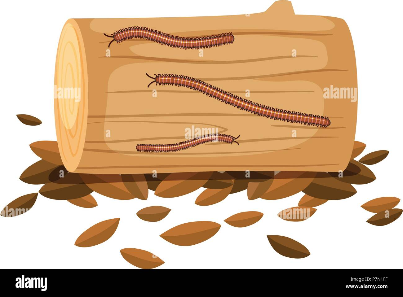 Centipede On Wood on White Background illustration - Stock Vector