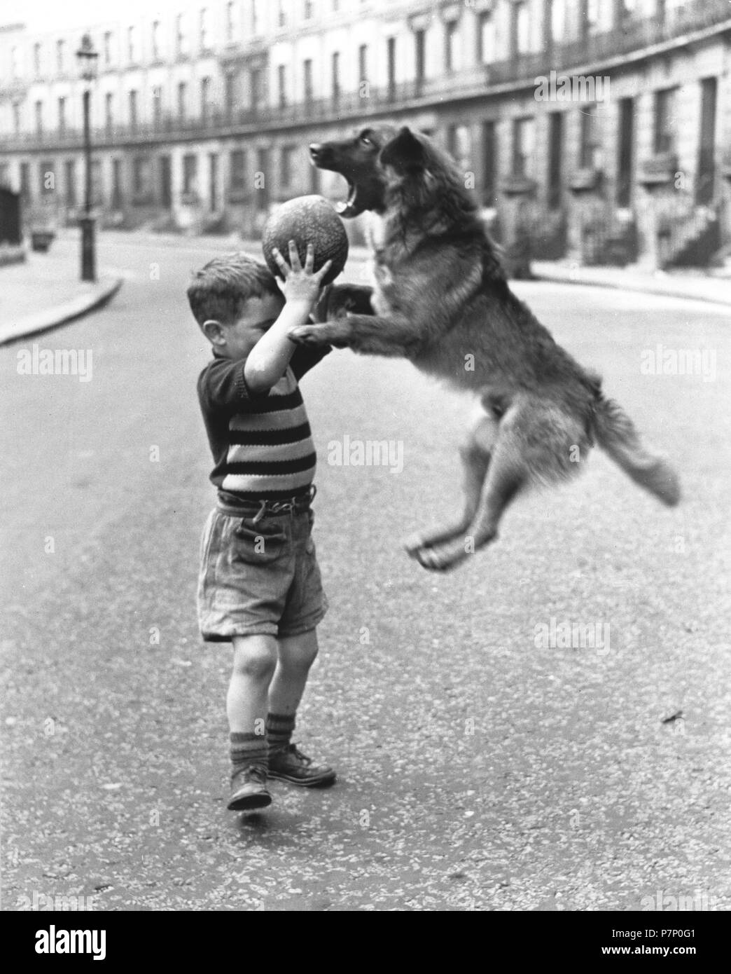 Dog and boy play with a ball, England, Great Britain - Stock Image