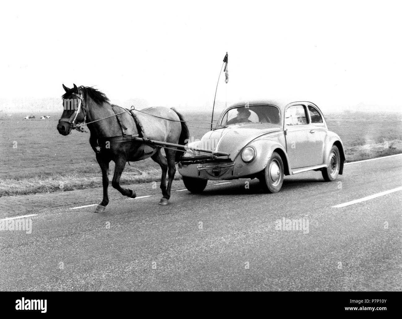 Horse pulls a VW Beetle, a PS, Mexico City, Mexico Stock Photo