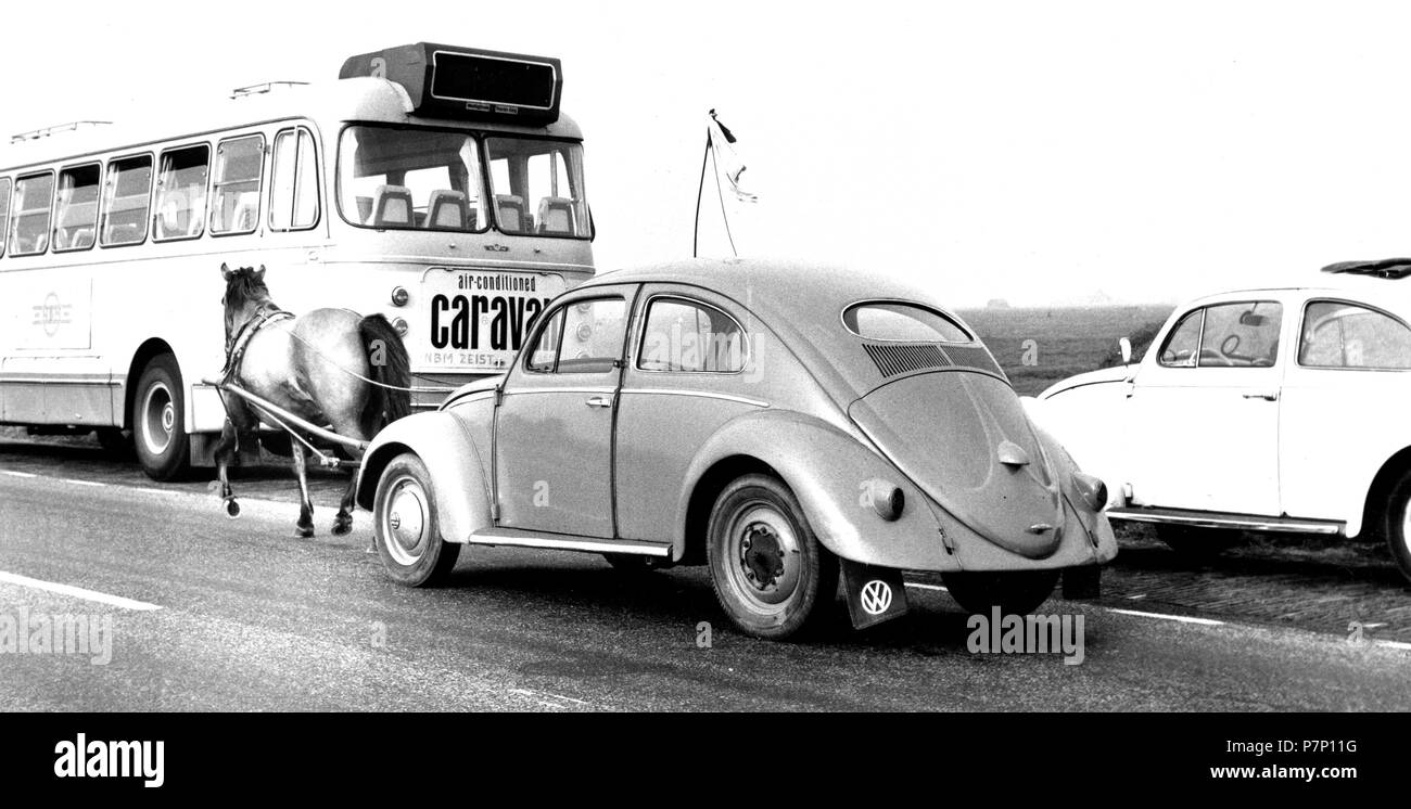 VW Beetle is pulled by a Perd, a PS, Mexico City, Mexico - Stock Image
