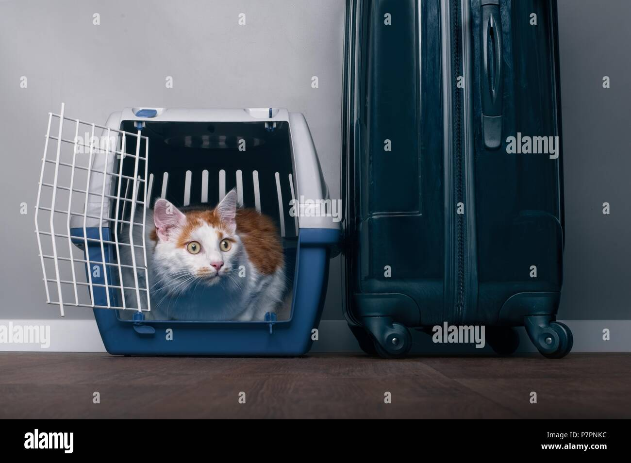 Cute tabby cat sit in a travel crate beside a suitcase and look anxiously sideway s. - Stock Image