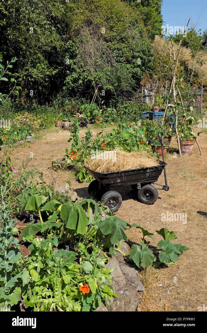 A wagon with dried straw grass to use as a mulch in the garden around wilting thirsty plants in the 2018 summer heatwave in West Wales UK KATHY DEWITT - Stock Image