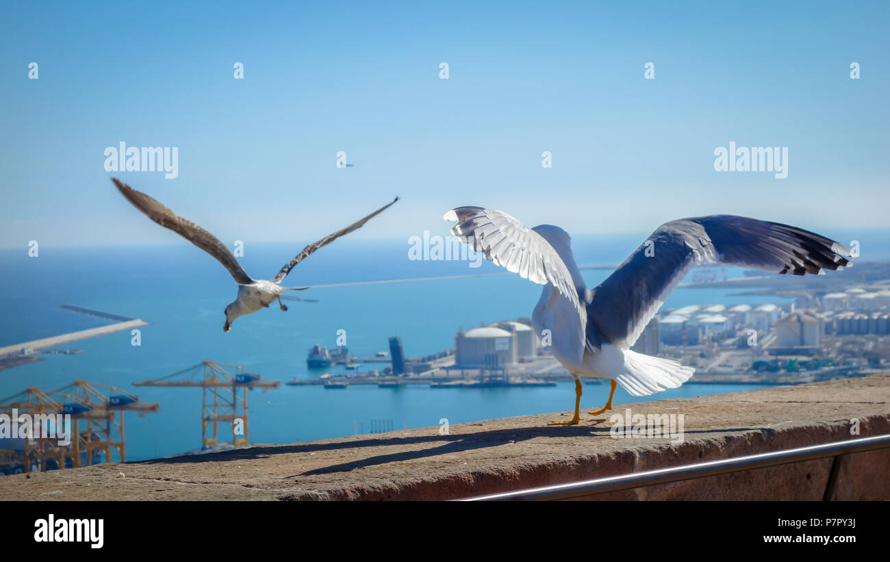 Beatiful couple of gulls taking their flight from castle Montjuic wall situated in Barcelona, mountain Monjuic, one of the beautifull places in Spain. - Stock Image