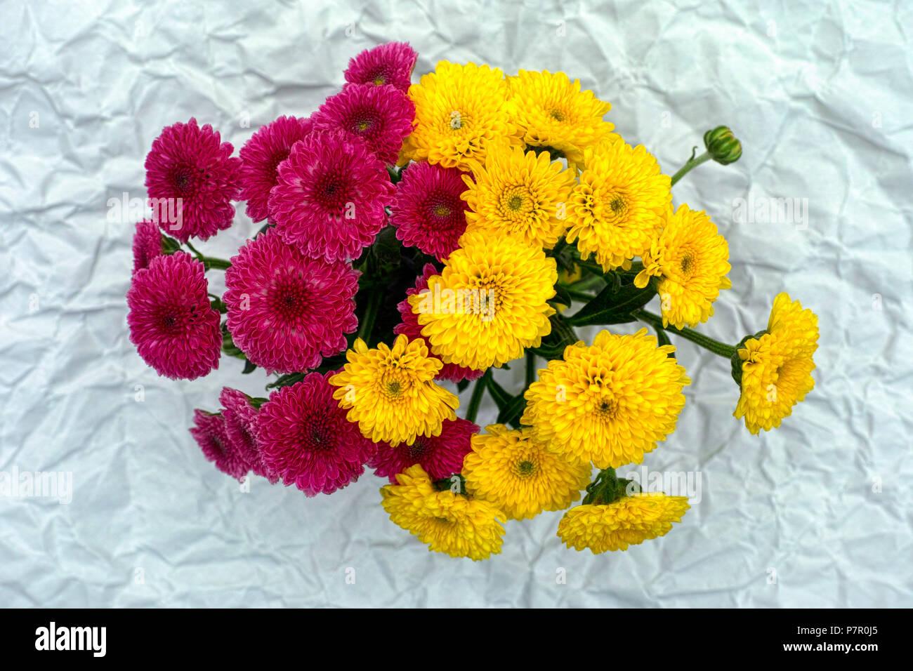 Yellow And Burgundy Flower Stock Photos Yellow And Burgundy Flower