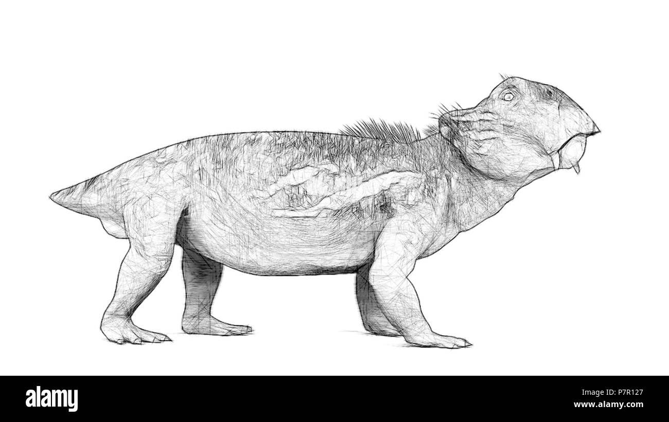 lystrosaurus - Stock Image