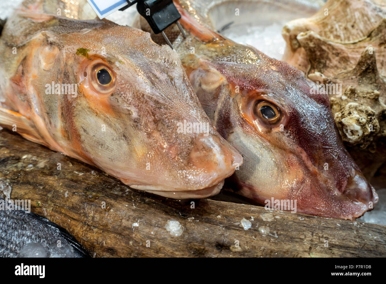 Two Gurnard fish heads (used for making fish stock) on sale in Borough Market, the famous food market in Southwark, London, England, UK. - Stock Image