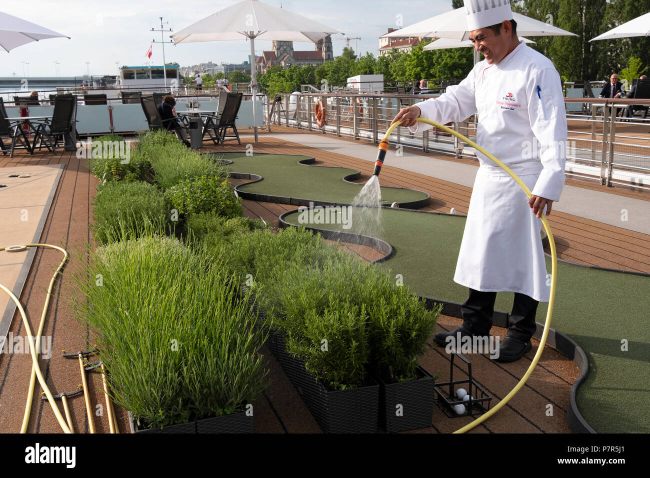 A cruise ship chef waters his herb garden on the upper deck while docked on the Danube in Vienna, Austria - Stock Image