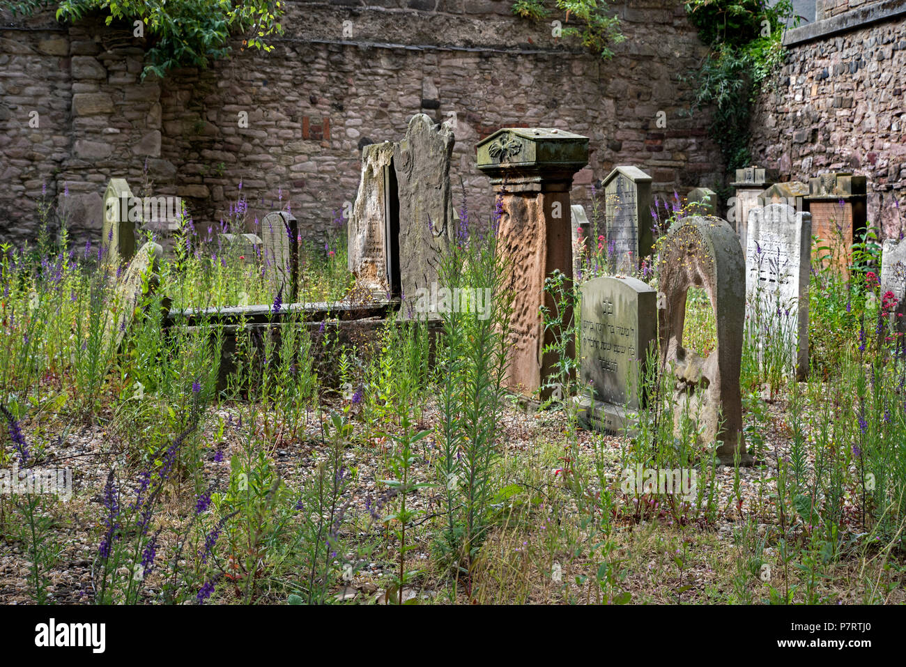 Weeds growing amongst thegraves in the Jewish Cemetery in  in what was the first Jewish Burial Ground in Scotland, opened in 1816. - Stock Image