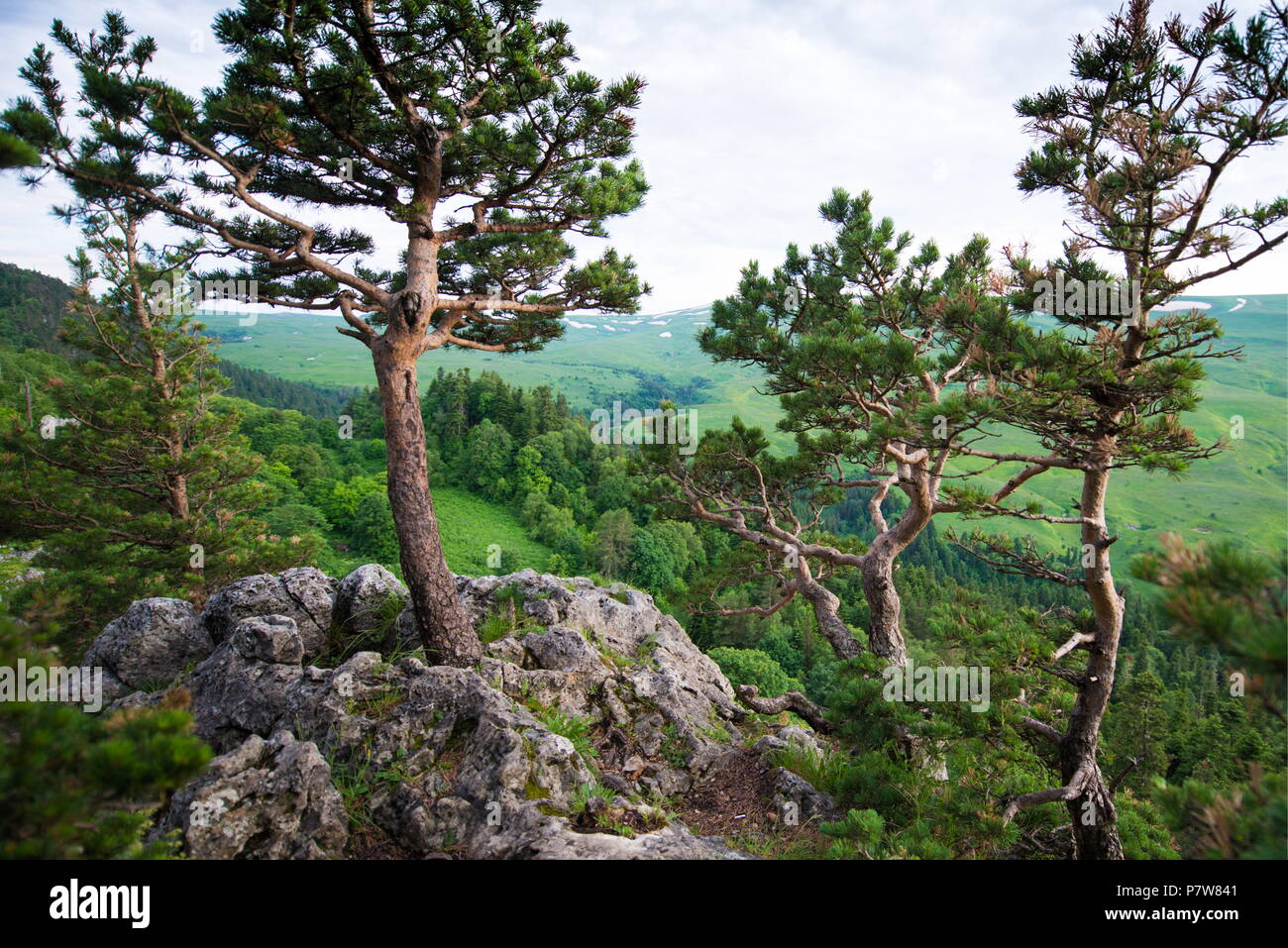 Caucasus State Biosphere Nature Reserve: detailed information