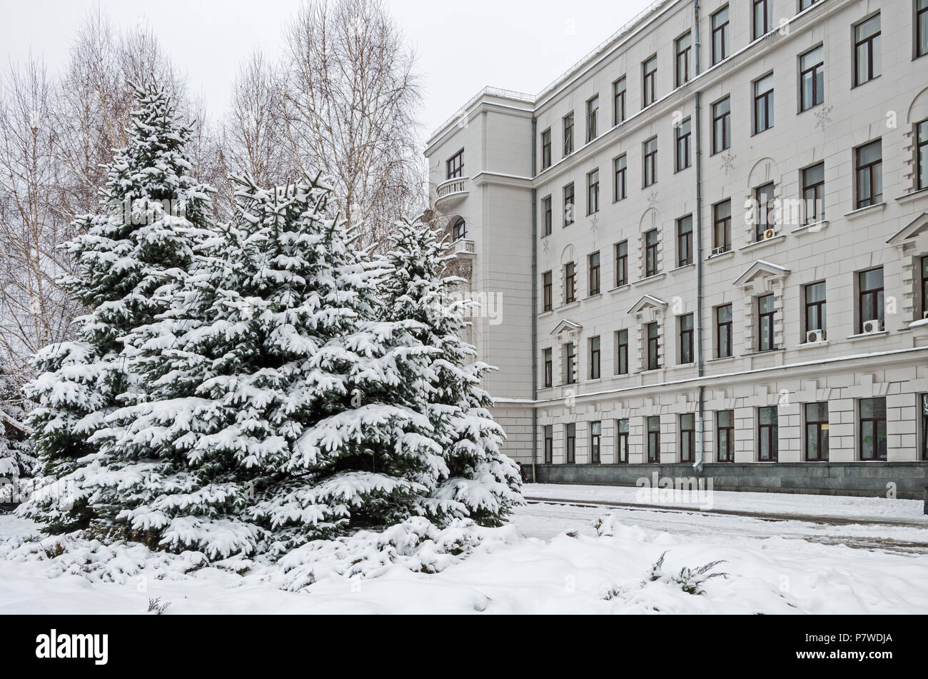Cold January snow covered spruces in the city park against backdrop of  administrative building - Stock Image