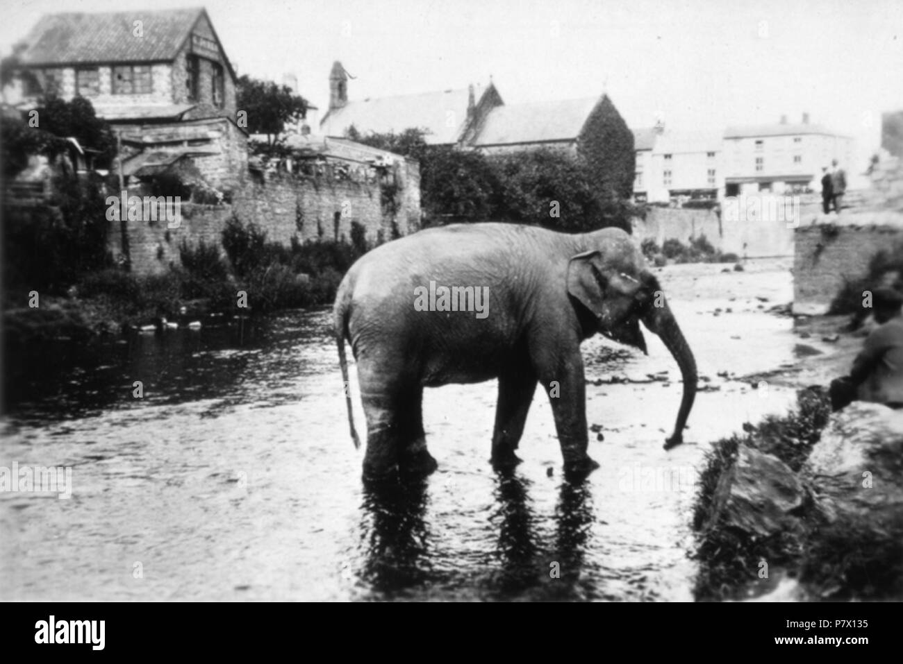 English: M6818 River Monnow according to Beacon 9 May 1930 an Elephant escaped from the Mop Fair as they were leaving Monmouth. St Thomas Church in the Background . 9 May 1930 143 Elephant escapes in Monmouth - Stock Image
