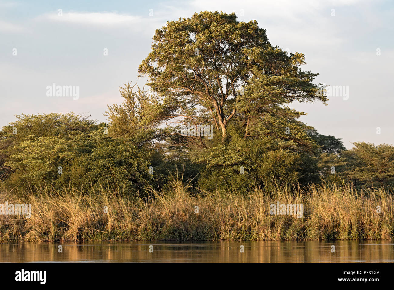 River bank of the Okavango River in Namibia - Stock Image