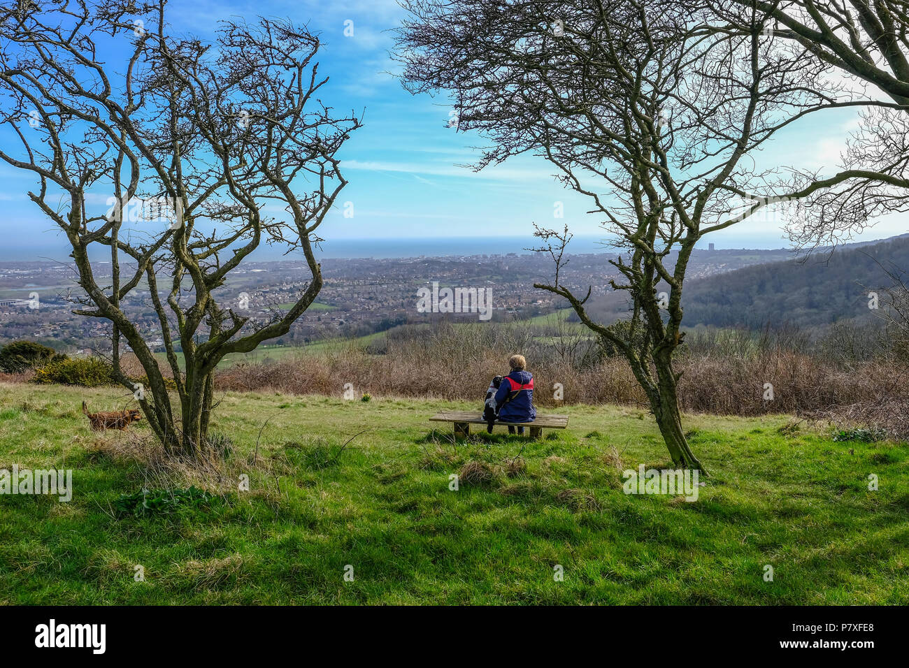 Rear View of a lady sitting contempating on a bench in the South Downs National Park.  Admiring the view and framed by trees. - Stock Image