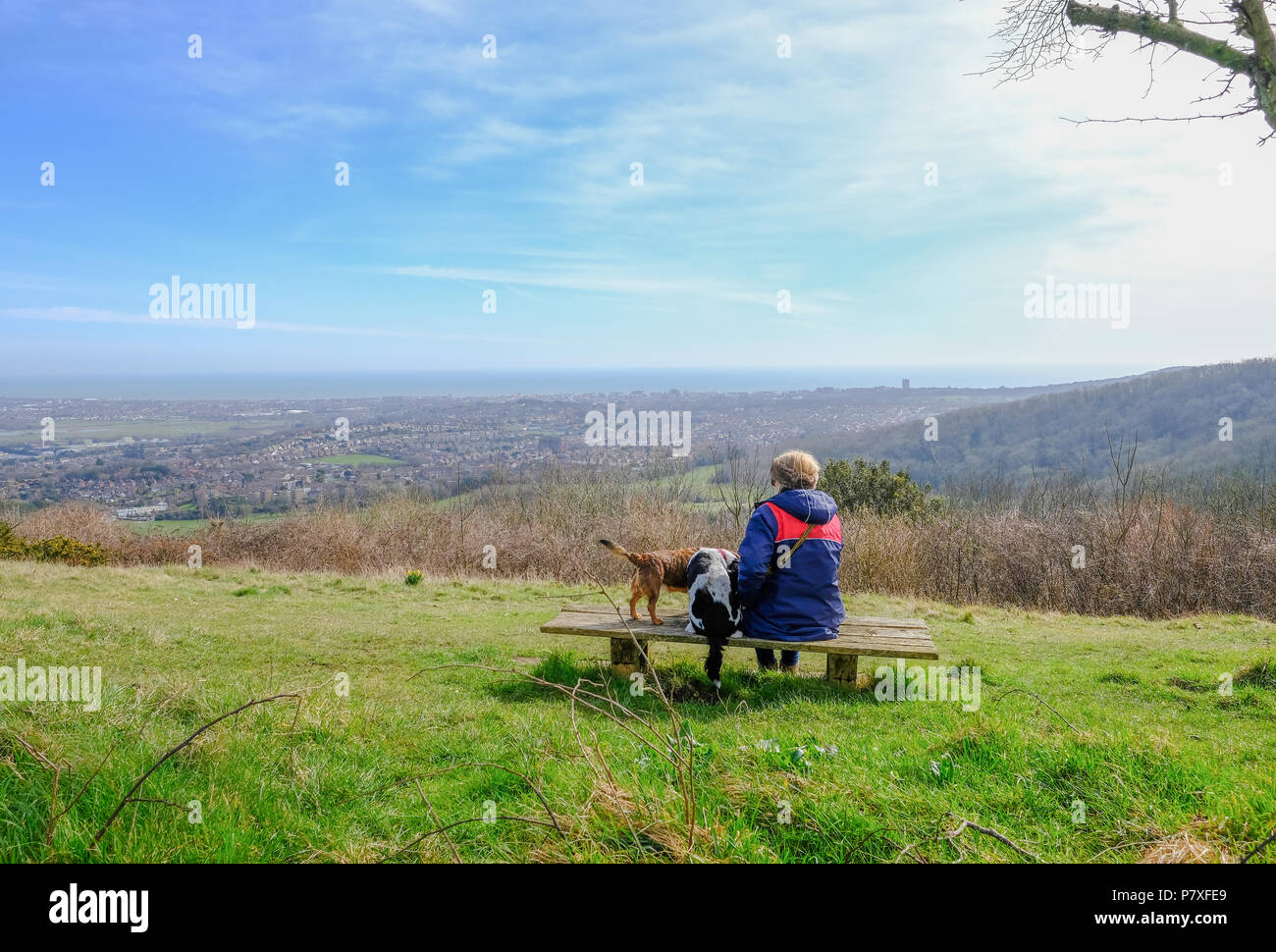 Rear View of a lady sitting with her dogs  on a bench in the South Downs National Park.  Admiring the view. - Stock Image