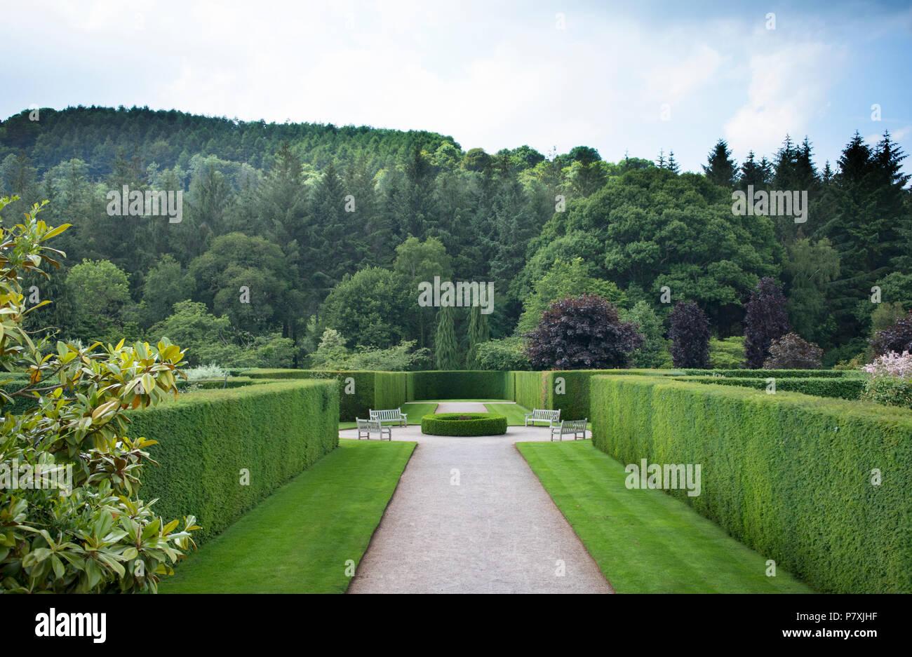 An avenue of yew hedging at RHS Rosemoor Gardens, Torrington, UK - Stock Image