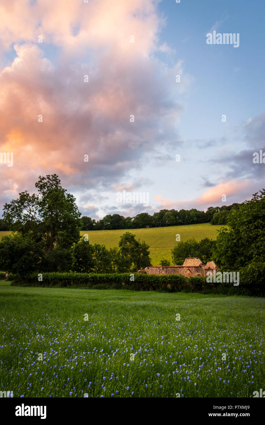 St James' Church ruin in the Bix Valley in the Chilterns - Stock Image