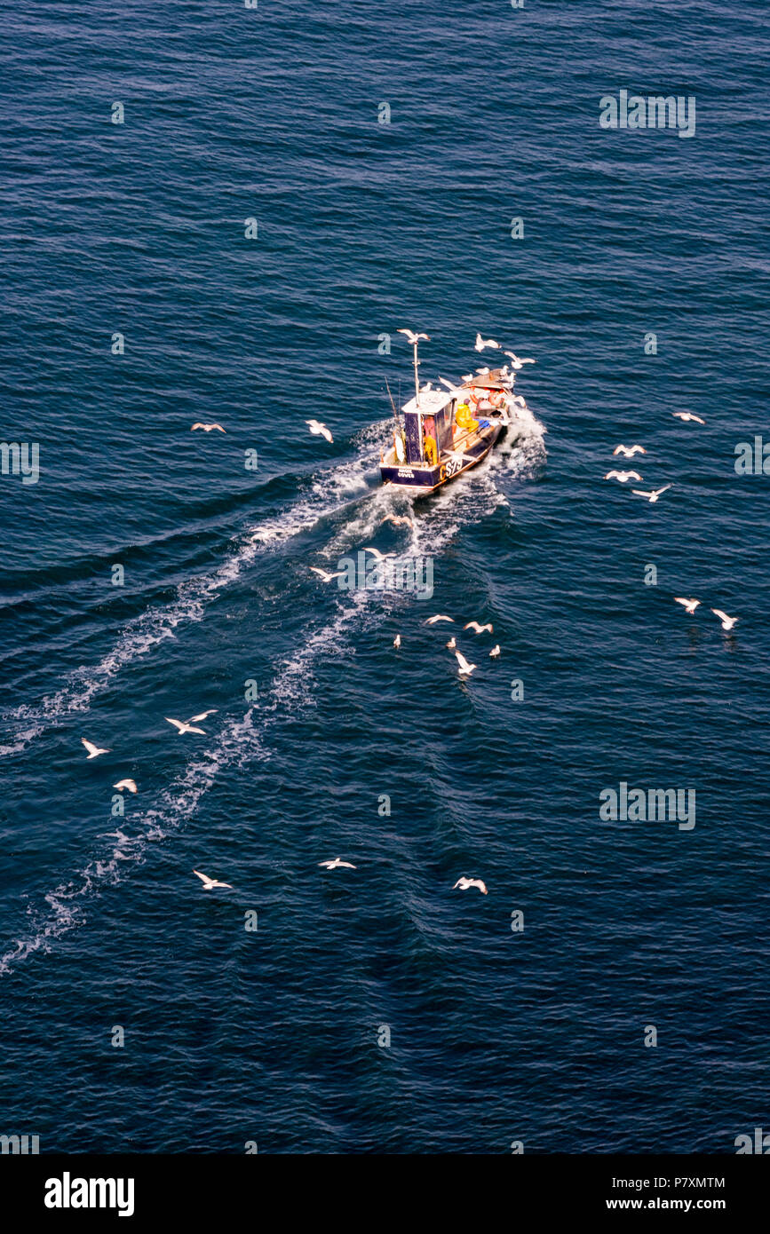 small inshore fishing boat trawling off of the isle of wight followed by seagulls. - Stock Image